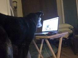 Rudy Updating Facebook